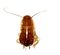 small-black-roach_edited.png