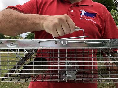 Rat control Hero Pest Solutions