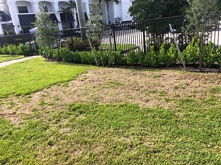 Chinch Bug treatment by Hero Pest Solutions