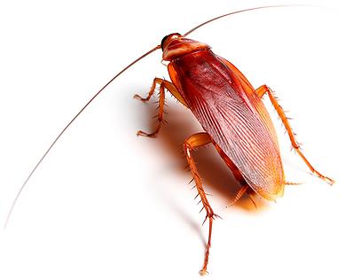 Palmetto Bug Hero Pest Solutions