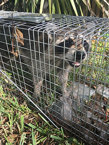 Cruelty-free Animal Trapping