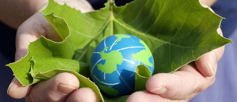 Green Pest Control Hero Pest Solutions