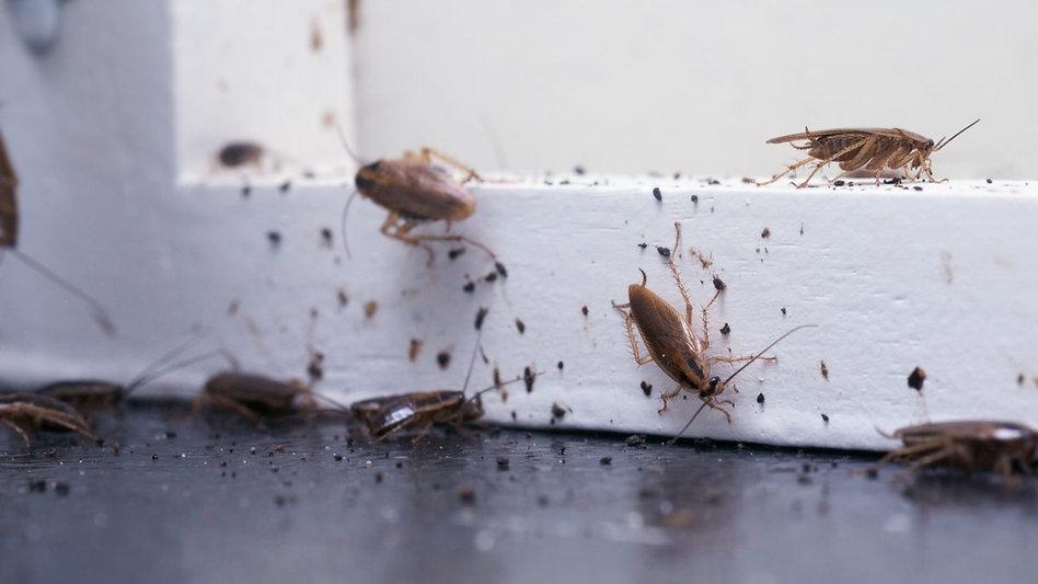 Roach Control Hero Pest Solutions