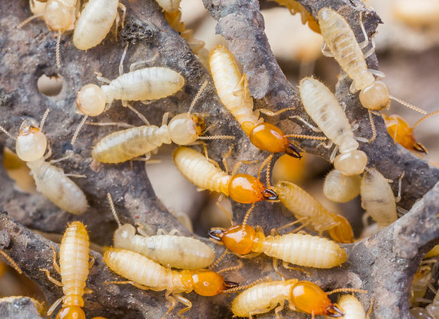 Termite Control Hero Pest Solutions