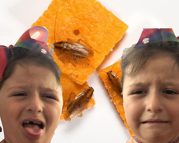 roach on food pt 1.jpg