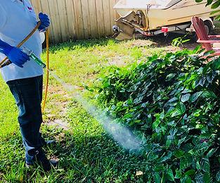 Lawn spray for fleas in Palm beach County