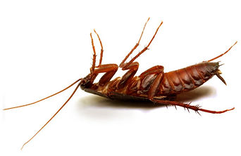 Roach Control Hero Pest Solutions