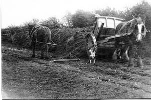Wagon & horse