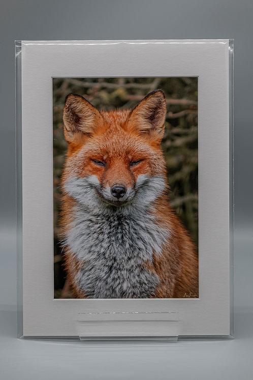 Fabulous Mr Fox Portrait