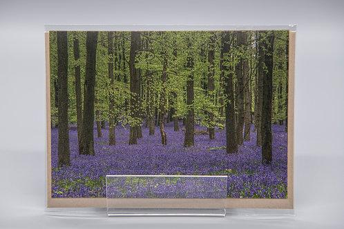 A6 Greetings Card Dockey Wood Bluebells