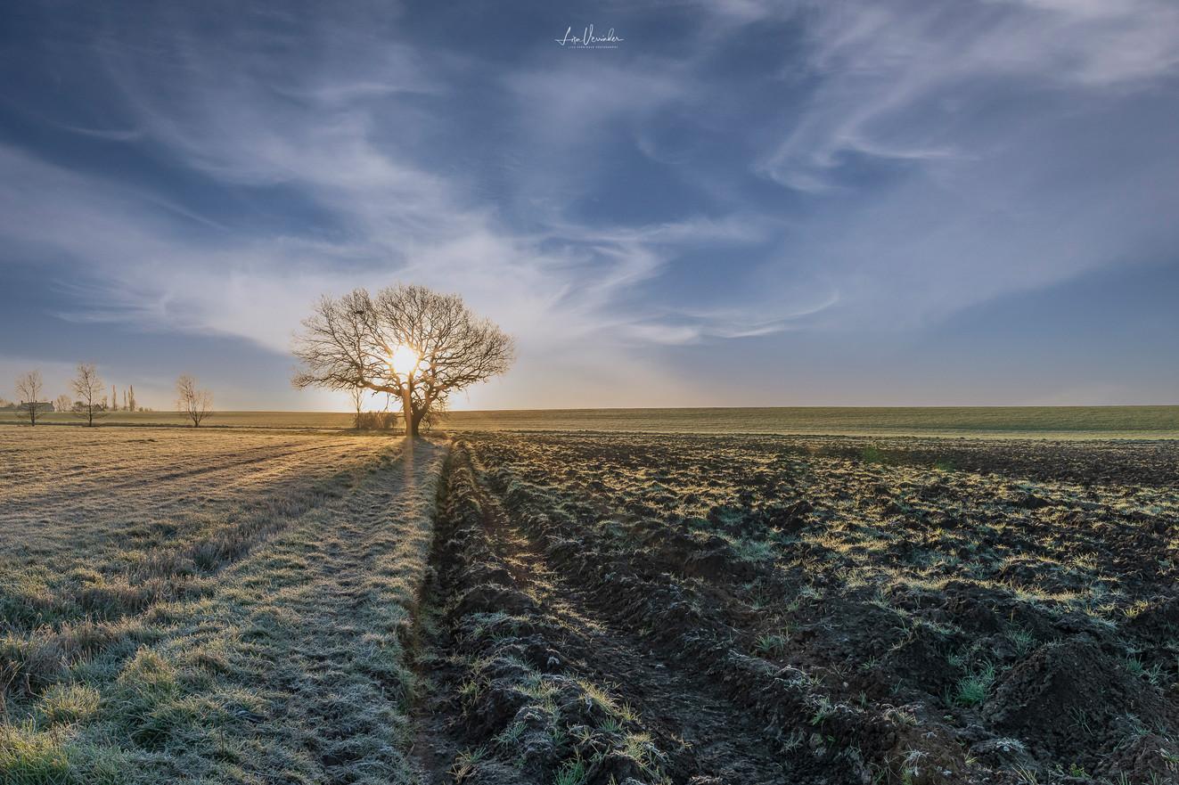 Fenland Winter Sunrise