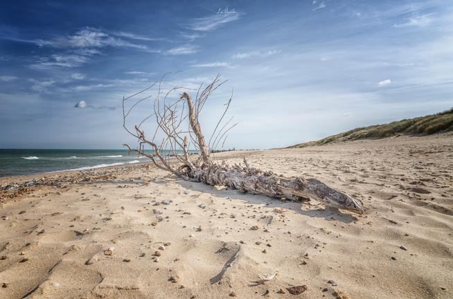 Driftwood on a Norfolk Beach