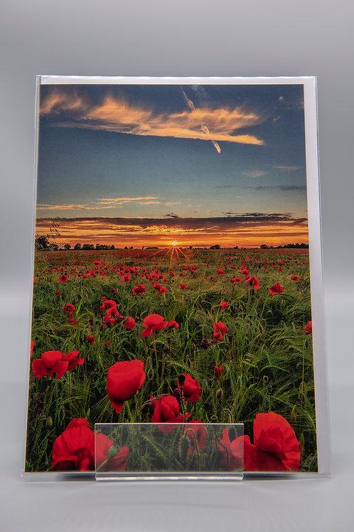 A5 Greetings Card Poppies & Barley