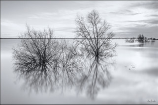 Ouse Washes Flooding RSPB Welches Dam