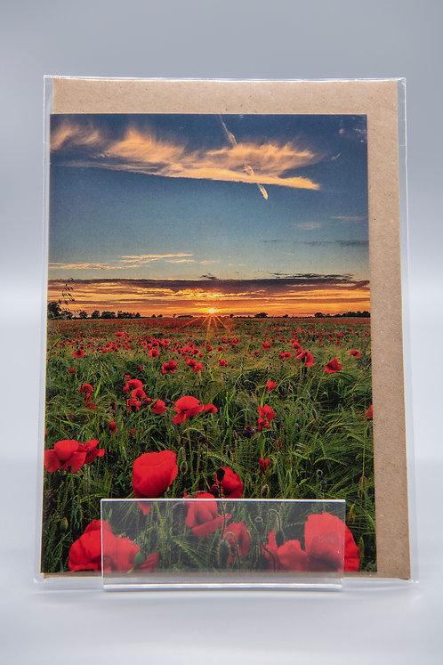A6 Greetings Card Poppies & Barley