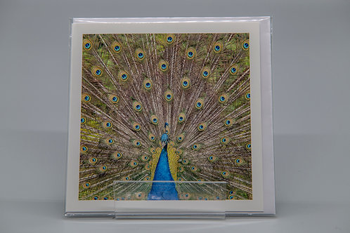 135mm Square Greetings Card Peacock