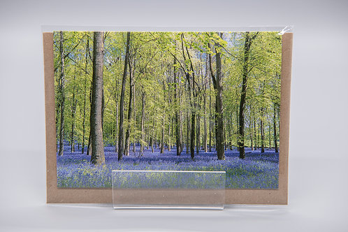 A6 Greetings Card Bluebell Woods