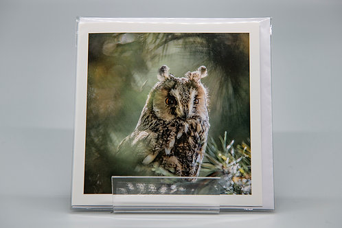 135mm Square Greetings Card Long Eared Owl