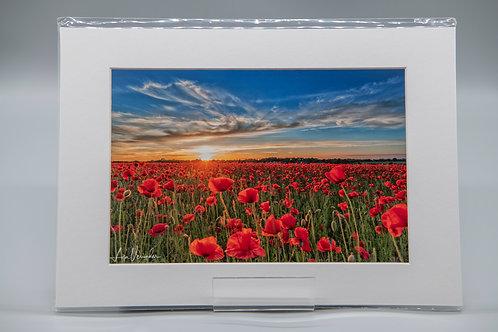 Elmswell Suffolk Poppies Sunset