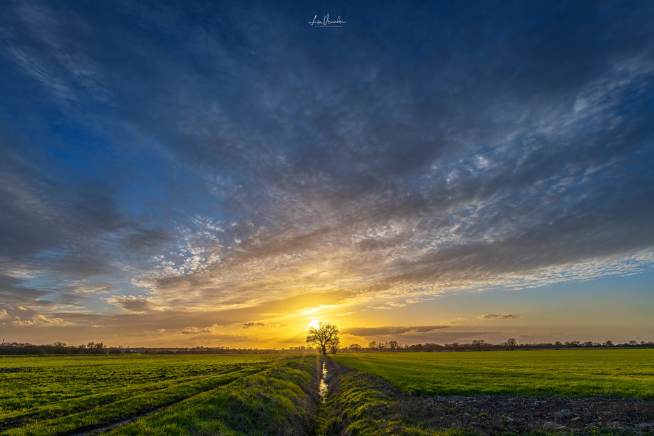 The Fenland Tree at Sunset