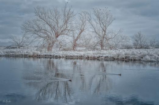 Ely Riverside Winter Trees
