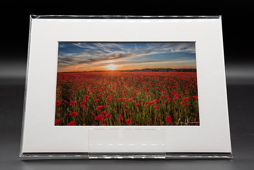 Elmswell Suffolk Poppies