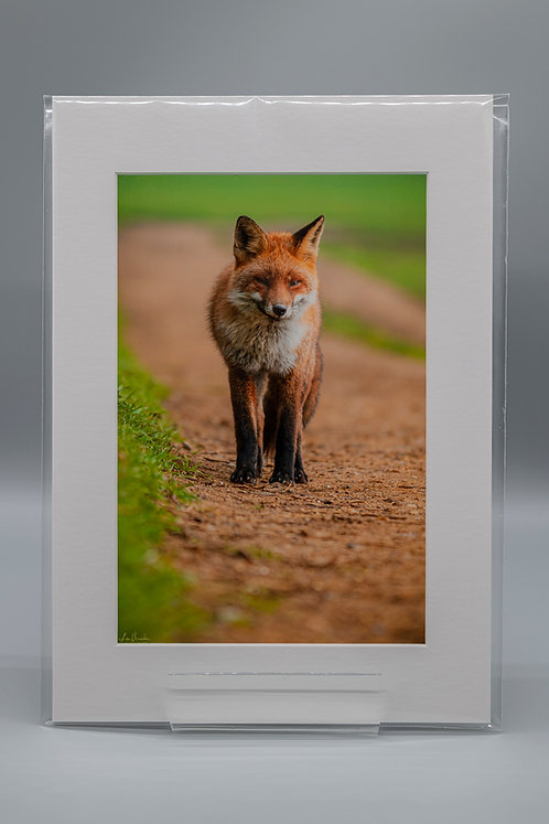 Fabulous Mr Fox