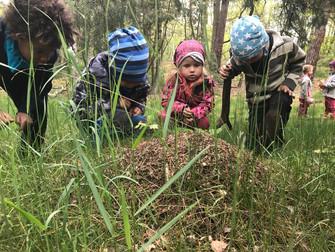Strombulíni v lese, 32. týden