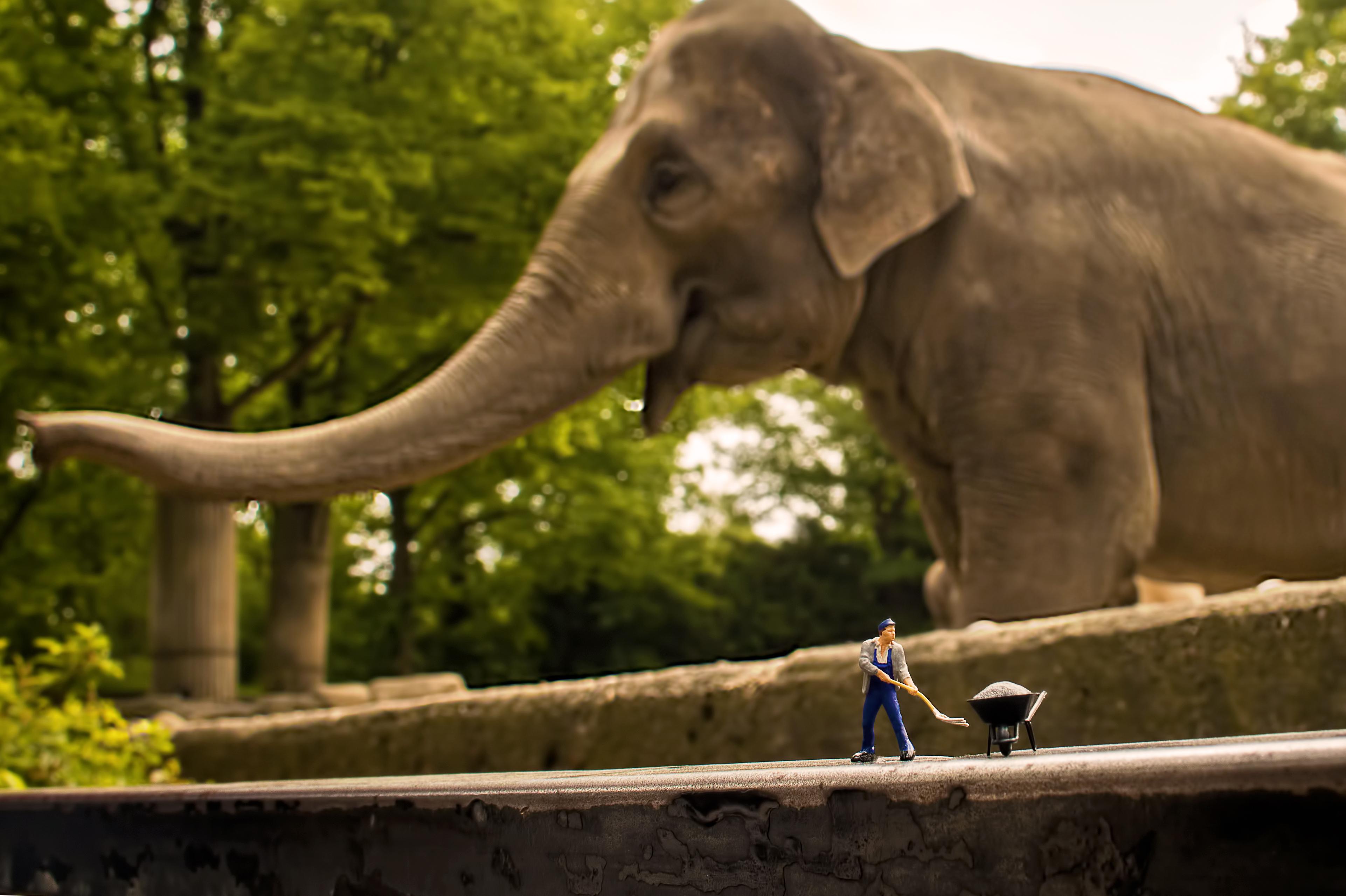Hagenbeck Elefant Ausschnitt