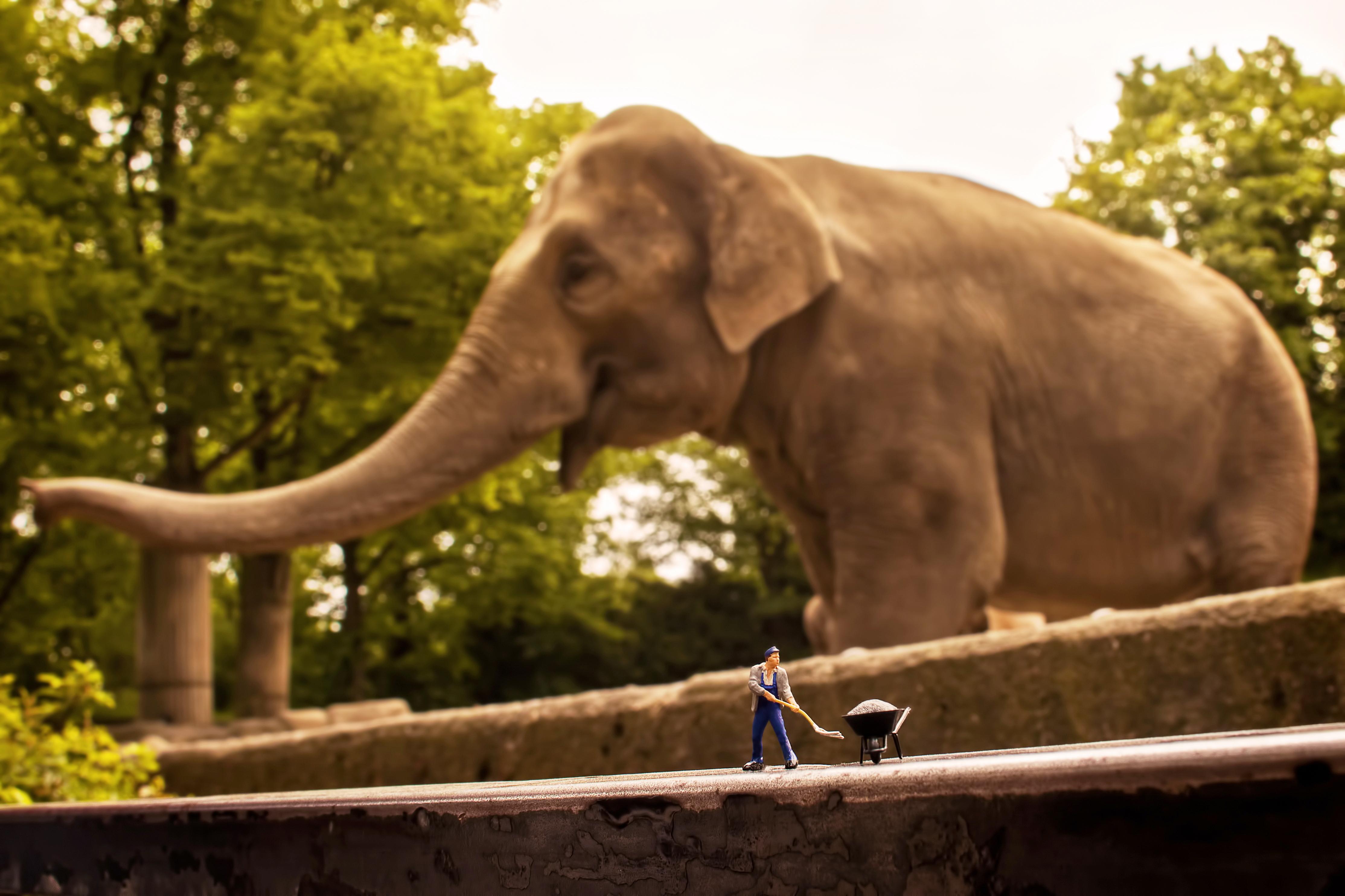 Elefantenpfleger