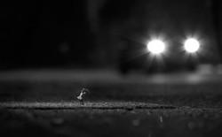 Scheinwerferlicht sw