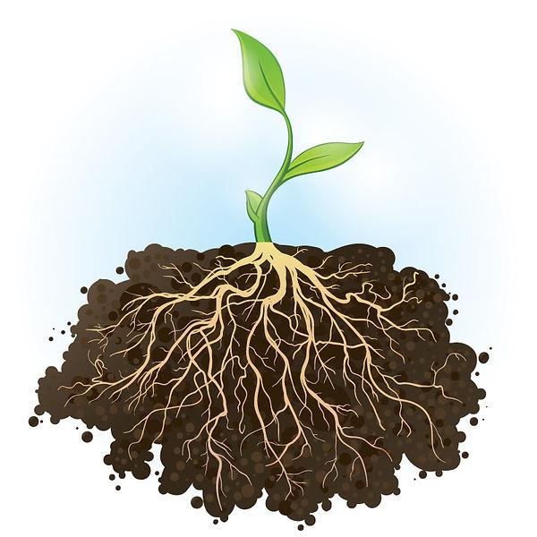Roots copy.jpg