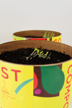Anything Grows biodegradable compost packaging.  Pick n' Pay has been exploring fresh ways togrow the environment and the community. One of the problems we face is what to dowith all ourorganic waste?  So, through the Pick n' PayFoundation Small Business Incubator, we're turning our organic waste into useful and beautiful compost pots, from which, 'Anything Grows'.The organic waste is processed at the Epping Market, where it's naturally decomposed, before being packaged. The entire pot is made from recycled materials, natural food inksand eco glues, making it completely biodegradable and it's designed in such a way that holds water but also dissolves once planted. Sprinkle it over your garden, or just waterand turn it into a pot plant. During the composting process, fruit and veg seeds are naturally left in the soil, so if left to its own devices, the pot could start sprouting tomatoes or even egg plants.  But we're not just about growing food, we're also into growingcommunities. These pots have helped grow small businesses, generating more work for locals, and uplift numerous communities.  Because from fresh thinking, Anything Grows.