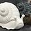 Thumbnail: Boris the snail