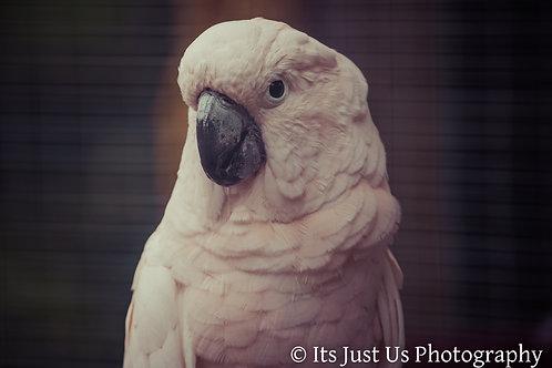 Parrot Photo Print