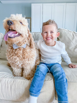 PIP - Goldendoodle