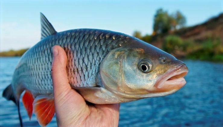 522152-fish_edited.jpg