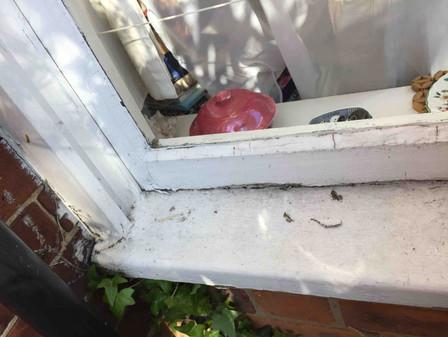 Areas of rot on Sash Window Sill
