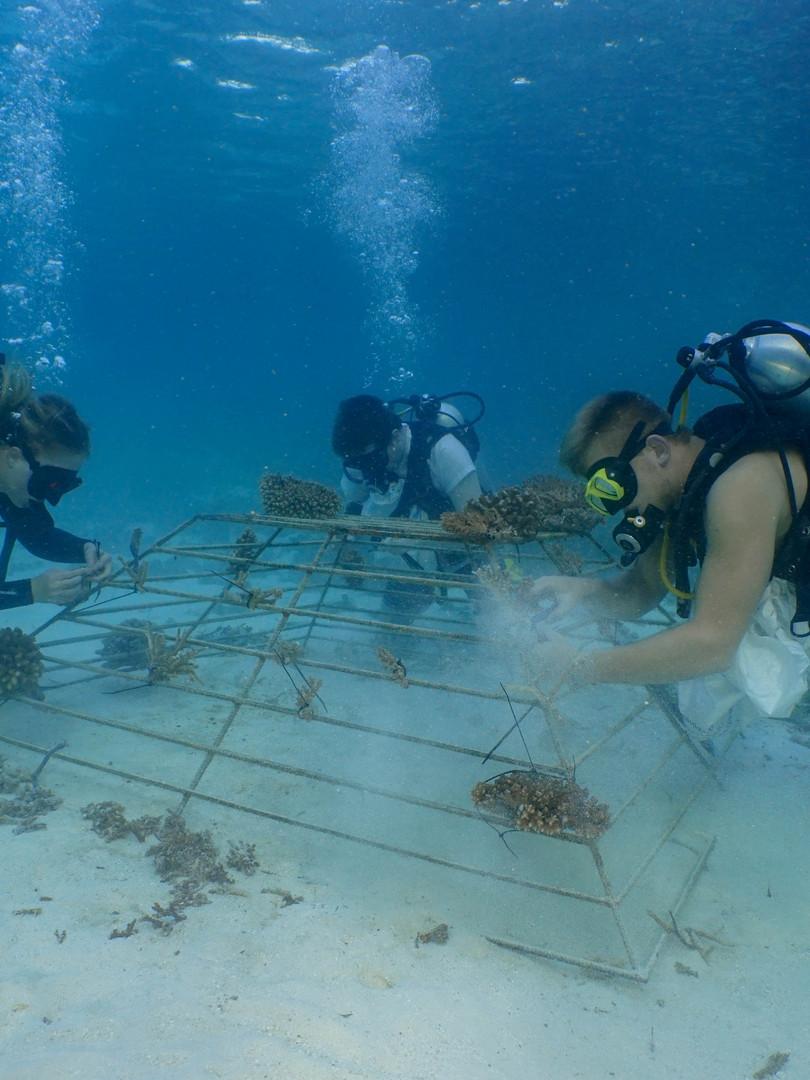 coral planting.jpg