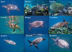 save turtles 2