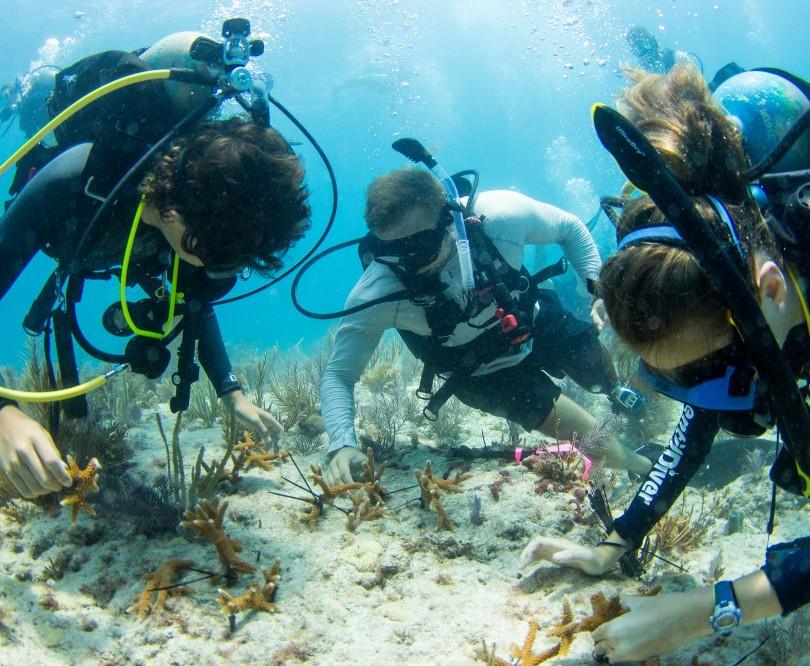 CoralPlanting_009-1.jpg