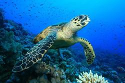 save turtles