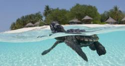 Save Maldives Turtles