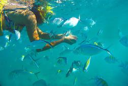 snorkel punta cana TORO