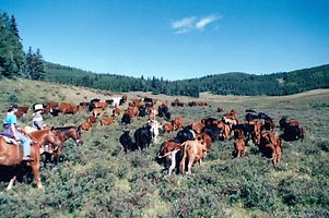Ranching_edited.jpg