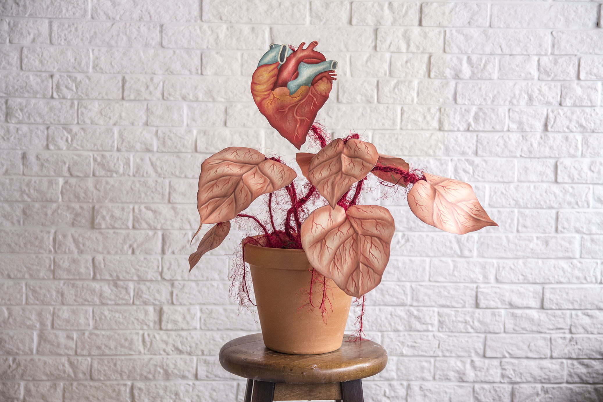 Vaso Sanguíneo (Blood Vase)