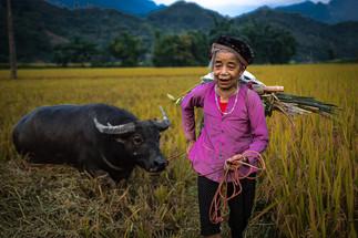 Vietnam - La dame & le buffle