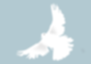 dove-153116_1280.png