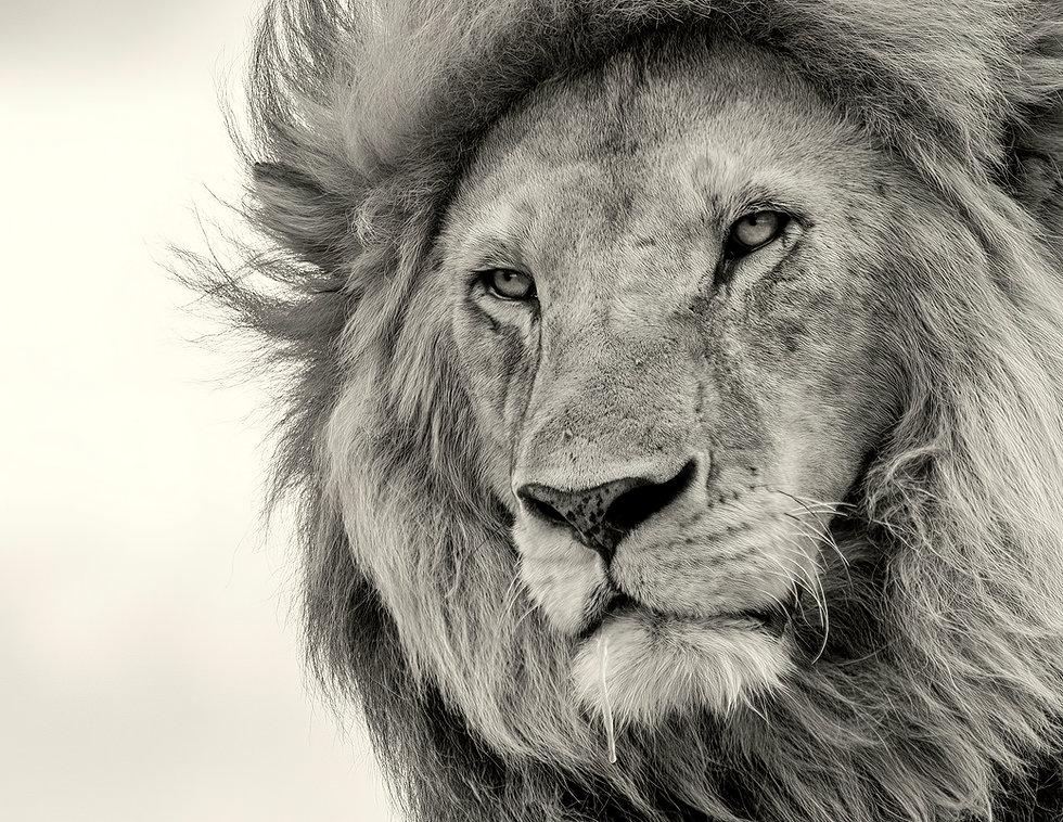LionDroolBook-standard-width-3600px-giga