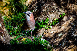 fotografía documental naturaleza